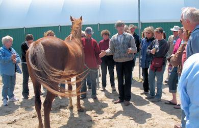 Horse Demonstration