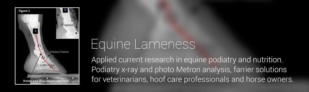 Equine Lameness